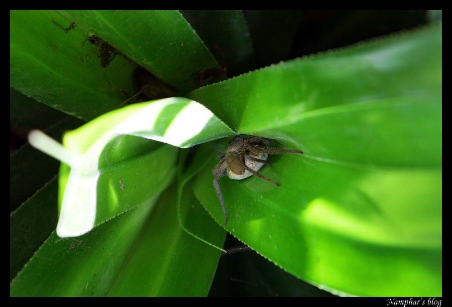 Araignée et son trésor